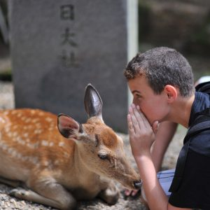 Our Deer Friends in Nara Japan