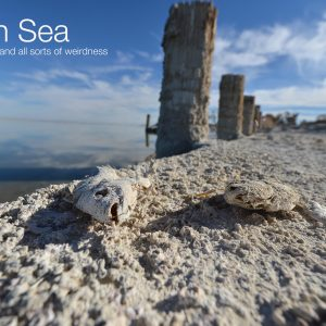 Best Photographs of the Salton Sea