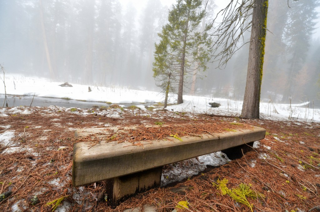 sequoia bench