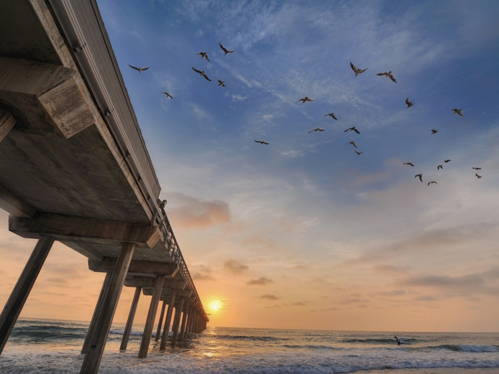 scripps pier with birds-3
