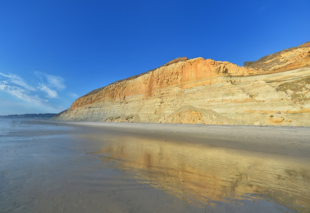 Golden Torrey Pines