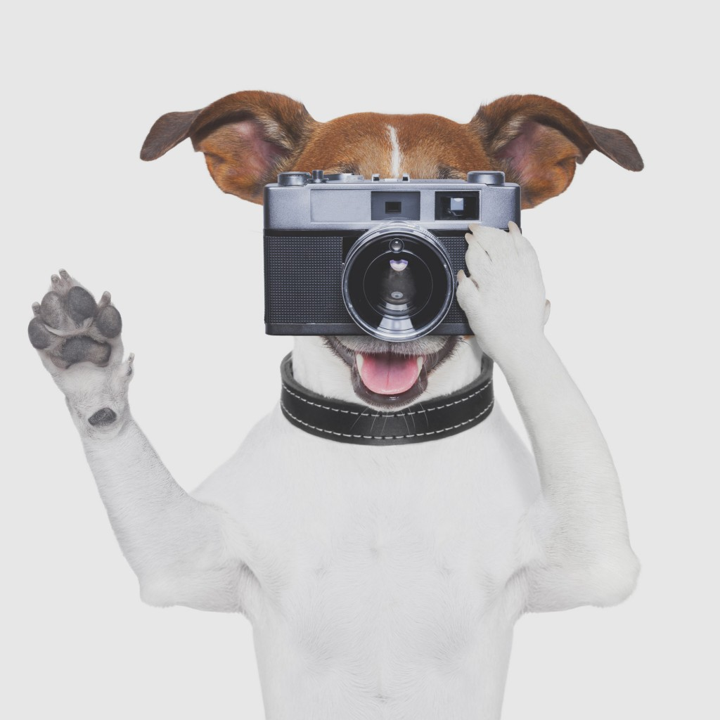 dog-with-camera